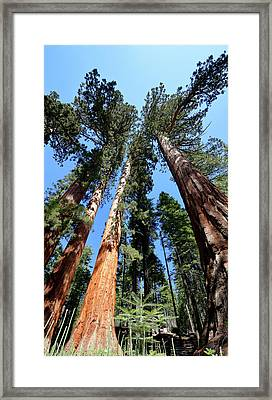 Sylvan Giants 2 Framed Print