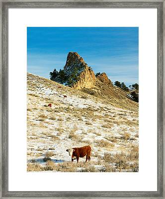 Sylvan Trail Framed Print by Todd Klassy