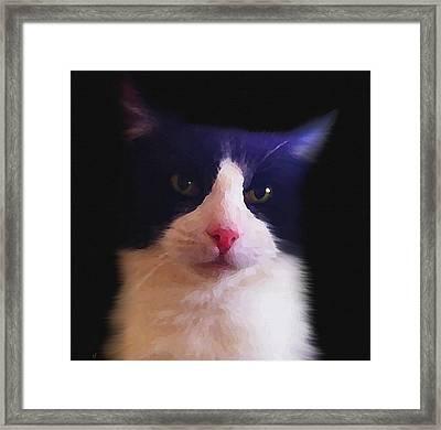 Sylvester Tuxedo Cat Framed Print