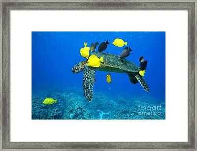 Symbiosis Framed Print