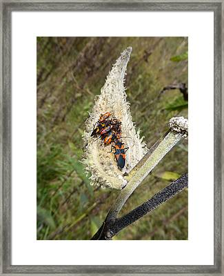 Framed Print featuring the photograph Symbiosis by Joel Deutsch