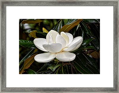 Symbol Of A Southern Summer Framed Print by Linda Brown