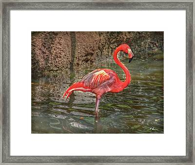 Framed Print featuring the photograph Symbol Of Florida by Hanny Heim