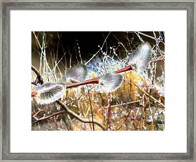 Symbol Of Spring Framed Print by Will Borden