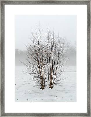 Symmetrees Framed Print