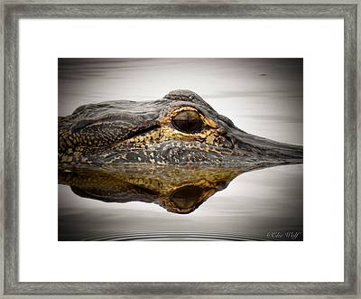 Symmetry And Reflection Framed Print