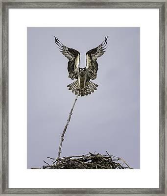 Symmetry Framed Print by Everet Regal