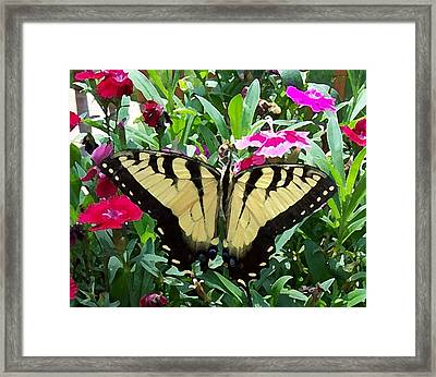 Framed Print featuring the photograph Symmetry by Sandi OReilly