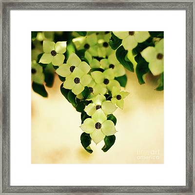 Symmetyr In Nature Framed Print by Tamyra Ayles