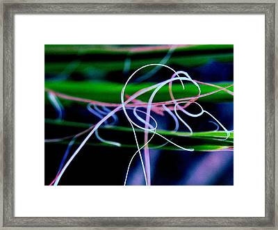 Symphony In Nature Framed Print by Susie DeZarn