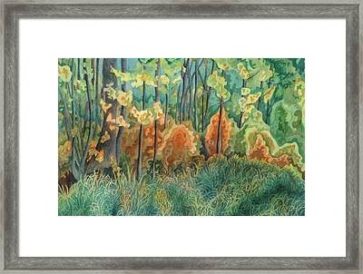 Symphony Of Light Framed Print by Anne Havard