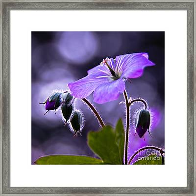 Symphony Of Light Framed Print