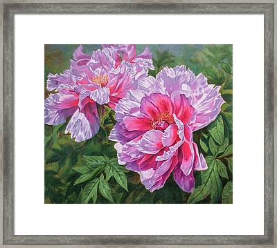 Symphony Of Peonies 5 Framed Print by Fiona Craig