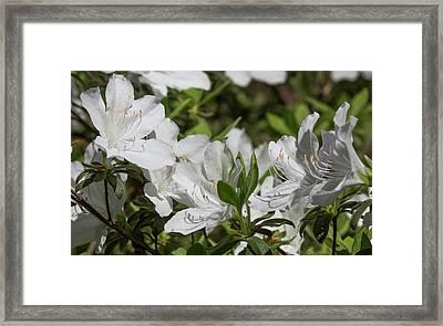 Symphony Of White Framed Print