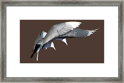 Framed Print featuring the photograph Synchronicity by JoAnn Lense