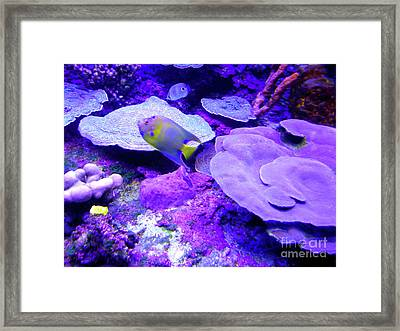 Framed Print featuring the photograph Ta Purple Coral And Fish by Francesca Mackenney
