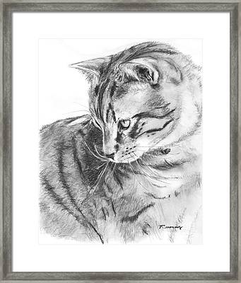 Tabby Cat In Profile Drawing Framed Print by Kate Sumners