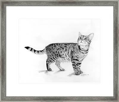 Tabby Cat Looking Up Framed Print