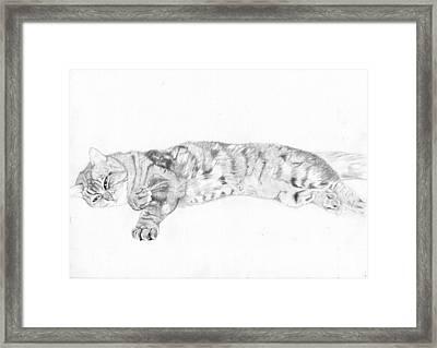 Tabby Cat Relaxing Framed Print