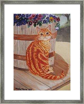Tabby Cat Framed Print