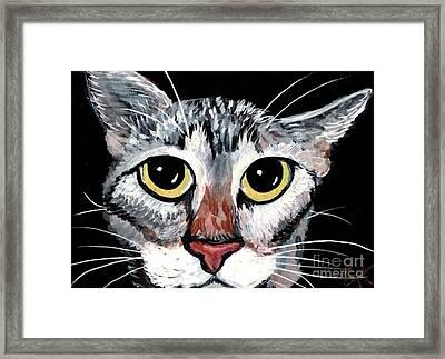 Tabby Eyes Framed Print by Elaine Hodges