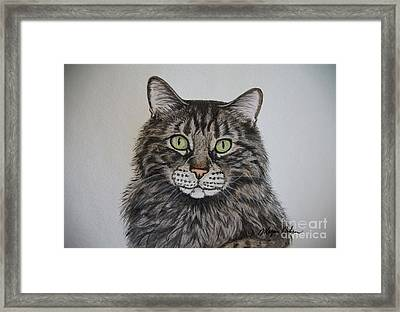 Tabby-lil' Bit Framed Print by Megan Cohen