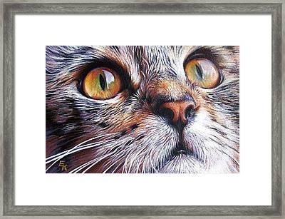 Tabby Look 2 Framed Print