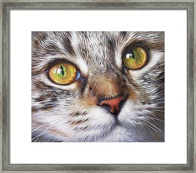 Tabby Look Framed Print