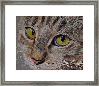 Tabby Stare Framed Print by Don MacCarthy