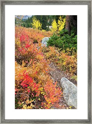 Table Mountain Trail In Fall Colors Framed Print by Mike Cavaroc