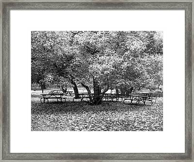 Tables And Tree Framed Print