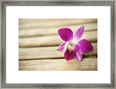 Tabletop Orchid Framed Print