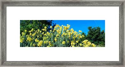 Taft Gardens In Spring, Ojai, California Framed Print by Panoramic Images