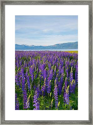 Tahoe In Summer Framed Print
