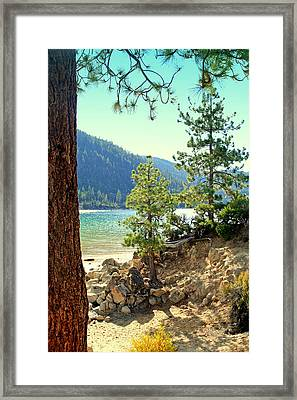 Tahoe Pines Framed Print by Lynn Bawden