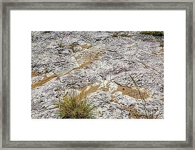 Tail Dragger Framed Print by Jon Burch Photography