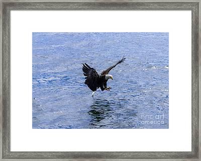 Tail Landing Framed Print
