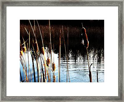 Tails Of Silver And Gold Framed Print by Toni Jackson