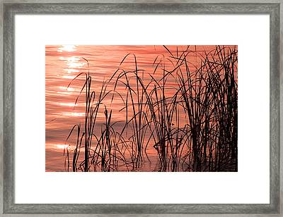 Tails Of Twilight Framed Print by Evelyn Patrick