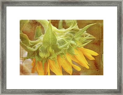 Take A Bow Framed Print by Joan Bertucci