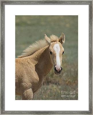 Take A Look  Framed Print by Nicole Markmann Nelson