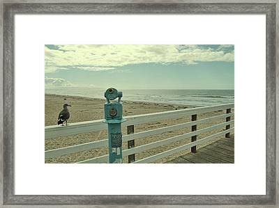 Take A Peek Framed Print by JAMART Photography