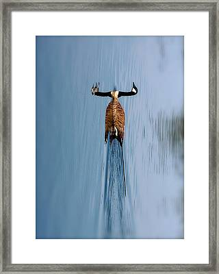 Take A Second Gander Framed Print by Sue Stefanowicz