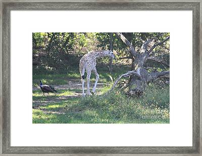 Take Care I Will See You Later Framed Print