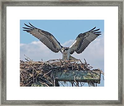 Take Flight 2 Framed Print