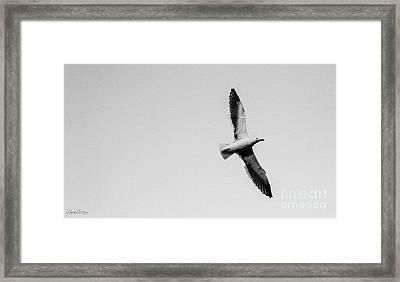 Take Flight, Black And White Framed Print