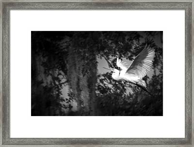 Take Flight Framed Print by Marvin Spates