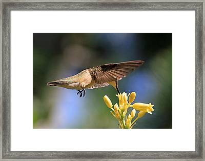 Take It From The Top Framed Print by Donna Kennedy