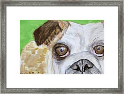 Take Me Home - Bulldog Framed Print by Barbara Giordano
