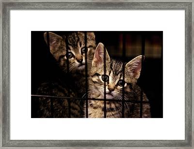 Take Me Home Framed Print
